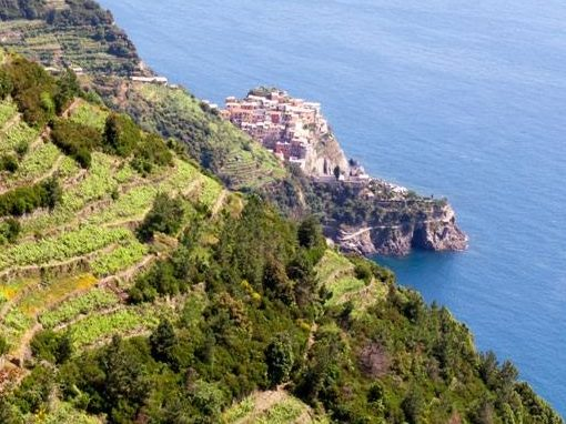 panorama vigneti cinque terre trekking